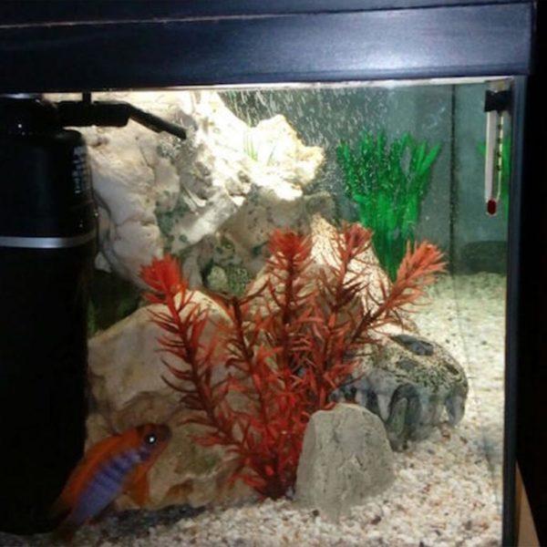 FIBALON Fisch in einem Aquarium mit glasklarem Wasser dank FIBALON plus