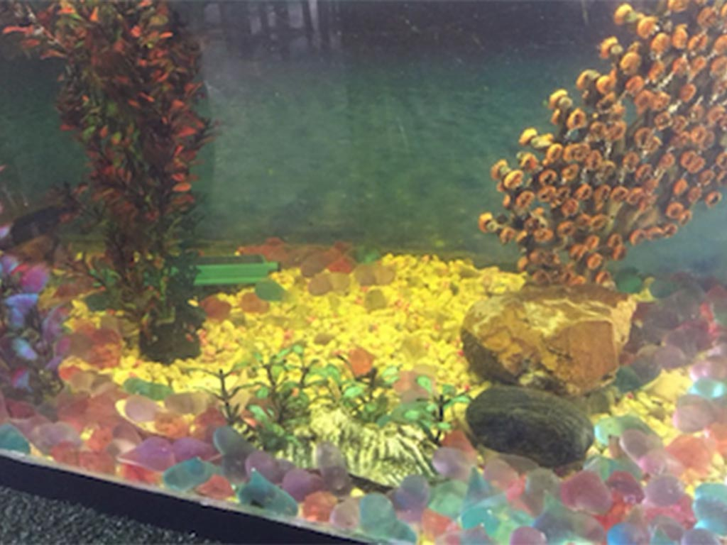 FIBALON plus - Aquarium mit klarem Wasser nach dem Wechsel zu FIBALON plus