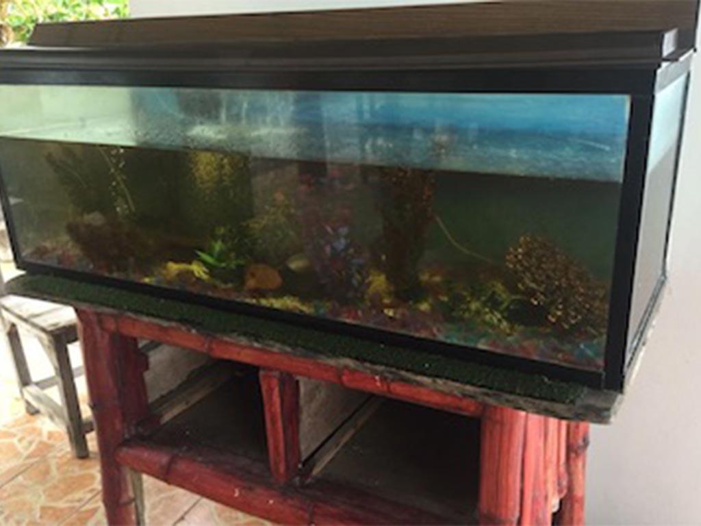 FIBALON plus - ein verschmutztes Aquarium mit einem herkömmlichen Filter