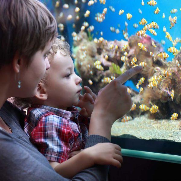 FIBALON plus Mutter mit Kind vor Aquarium