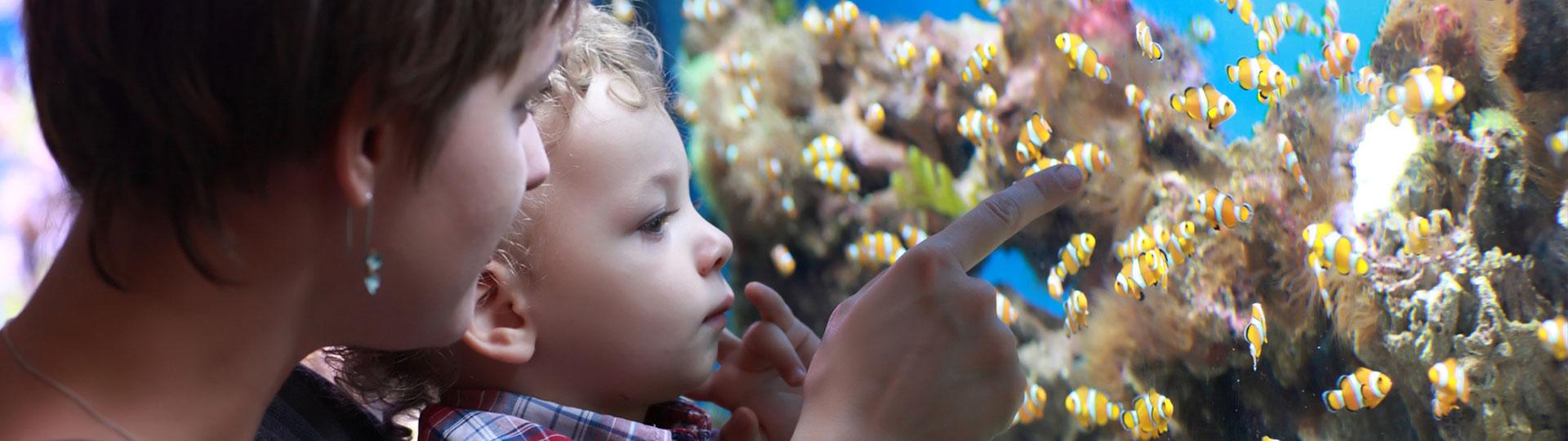 Mutter mit Kind vor einem Aquarium mit Fischen